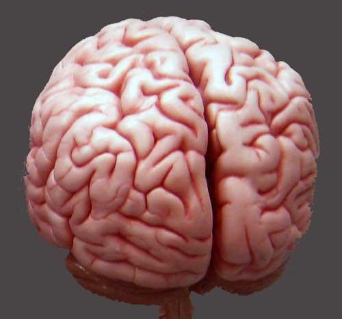 human_brain1