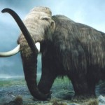 Mammoths of the Last Polar Age