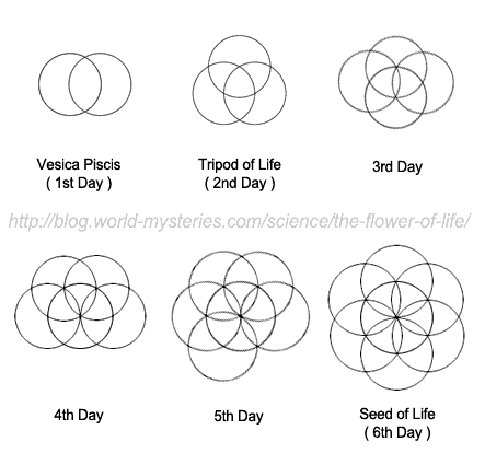 The first day is believed to be the creation of the vesica piscis then the creation of the tripod of life on the second day followed by one sphere added