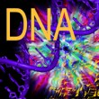 Junk DNA: Our Interdimensional Doorway to Transformation