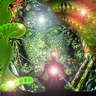 Post image for Ayahuasca – Ancient Remedy for Modern Times?