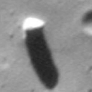 20 phobos10