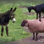 The Belief Effect in Psychokinesis: Sheep, Goat or Jackass?