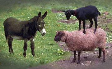 Post image for The Belief Effect in Psychokinesis: Sheep, Goat or Jackass?