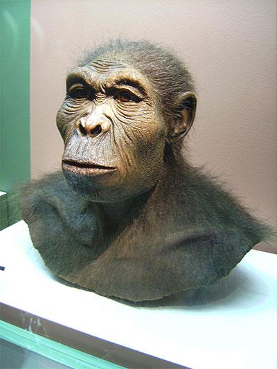 Homohabilis
