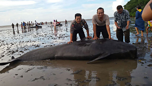 beached-whales-Java