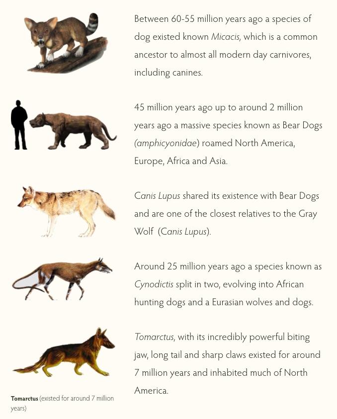 ac_dogs_evol