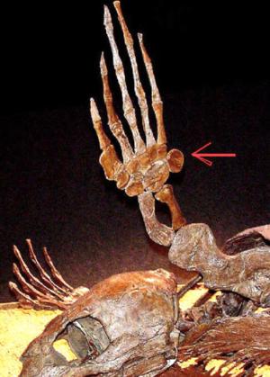 hand_bones1