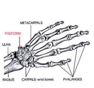 handbones2