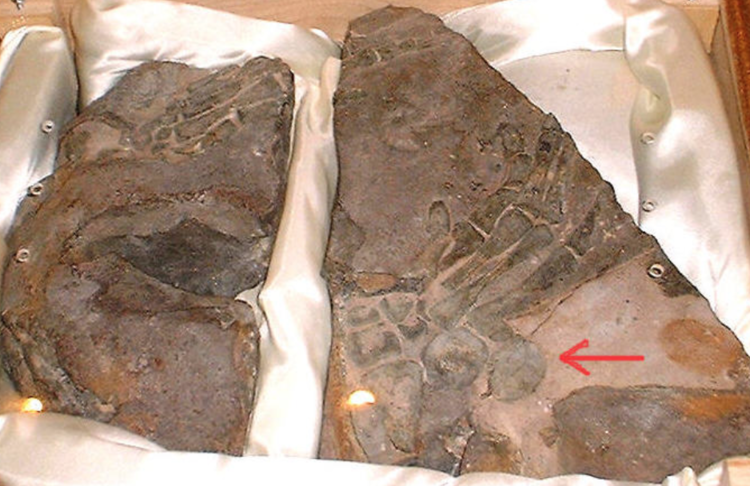pisiforms_fossil