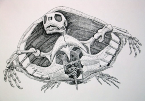 seaturtul_fossil