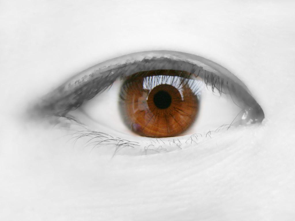 Avian Eye - the High Technology of Nature - World Mysteries Blog