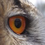 Avian Eye – the High Technology of Nature